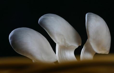 蘑菇营养价值与功效
